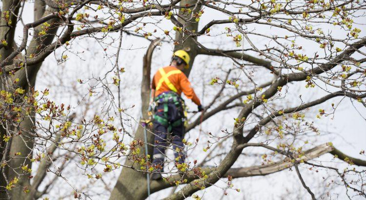 Tout savoir sur l'élagage des arbres: