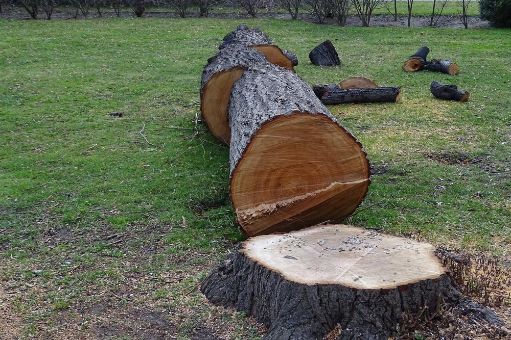 abattage arbre dangereux